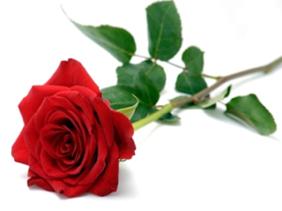 rozenspel